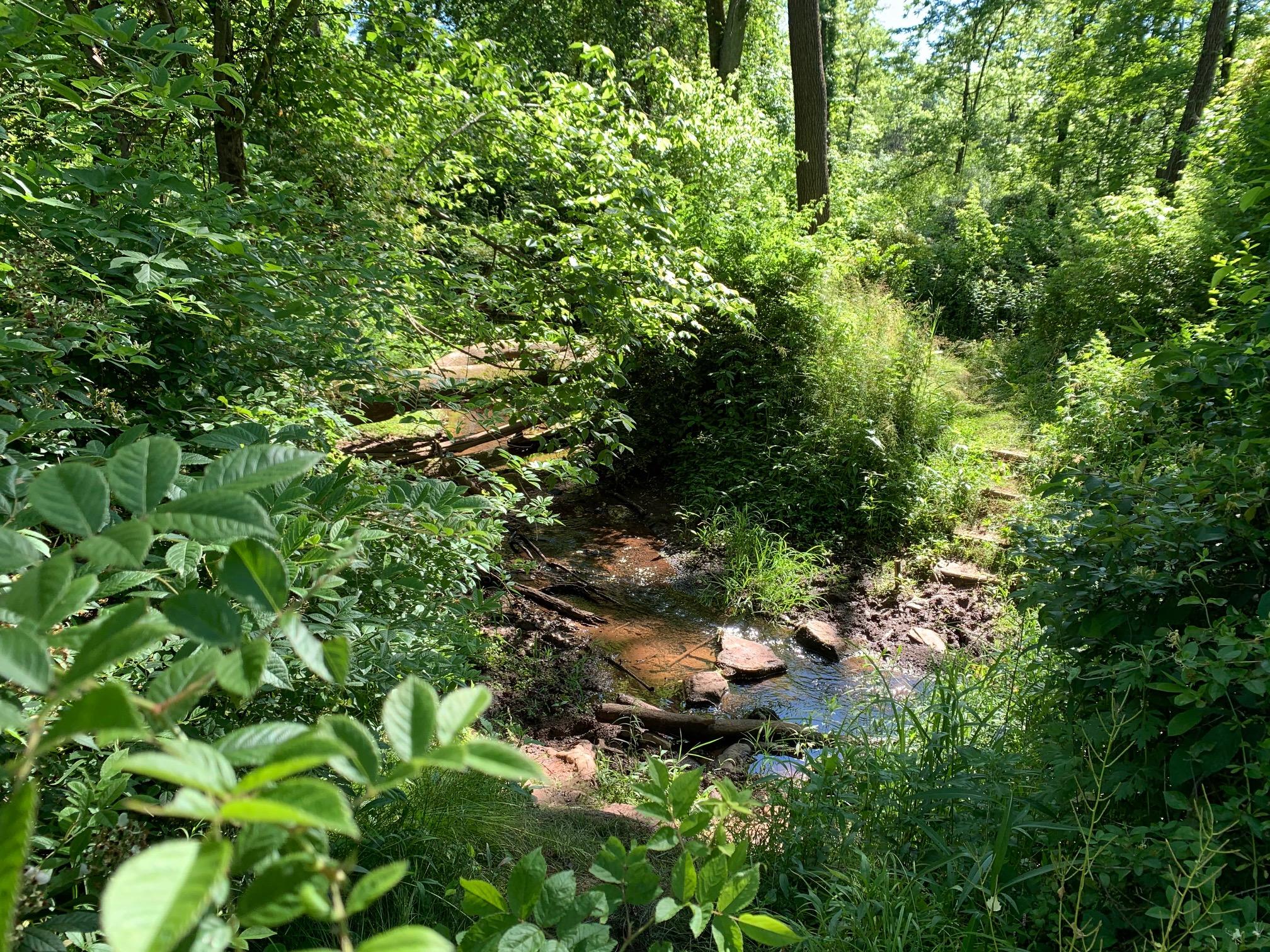 Butler Road Natural Area