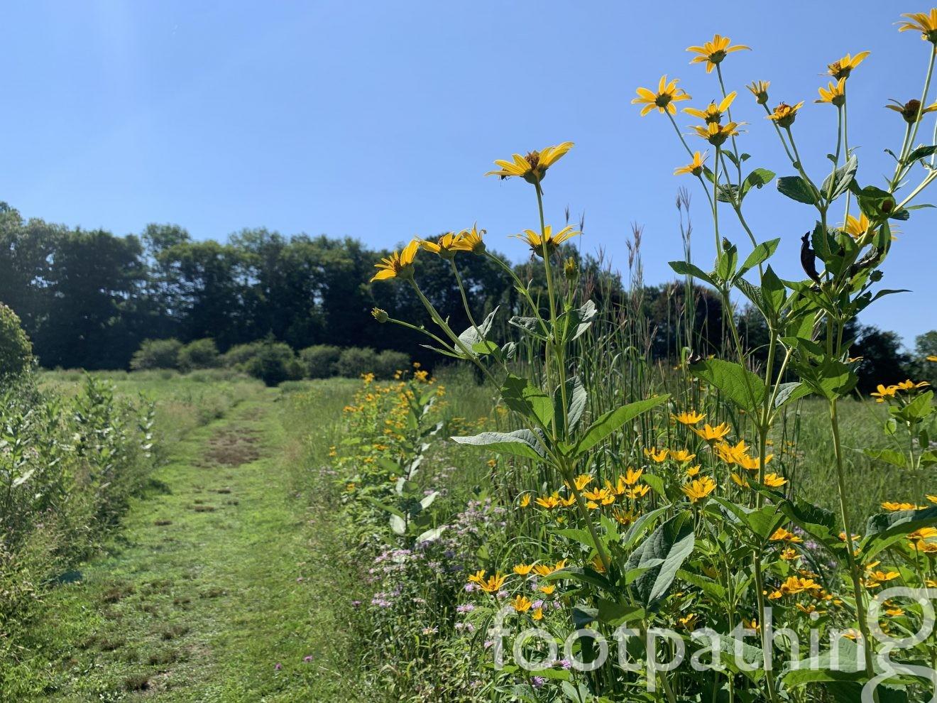 Greenway Meadows