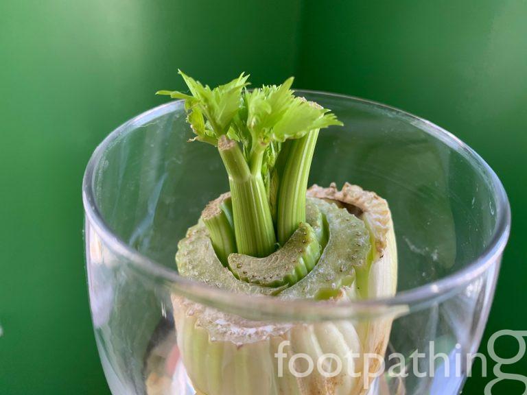 Celery: Day 11